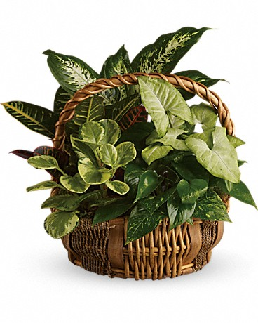 Planter Garden $59.95 & up Check Availability