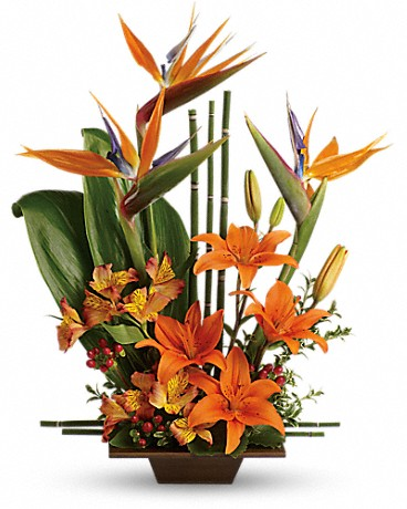 Sympathy - Exotic Grace Starting @ $79.95