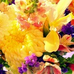 Floral Deal of the Day Assortment of Blooms $49.95 & up