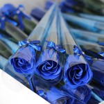 Valentine Blue Roses