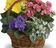 Planter-garden Starting @59.95 & up